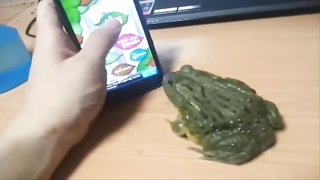 HOW to PISS Off a FROG Thumb